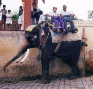 Elephnat riding 1 high2