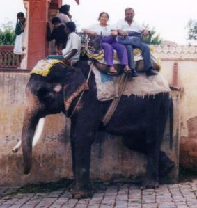 Elephnat riding 1 high3